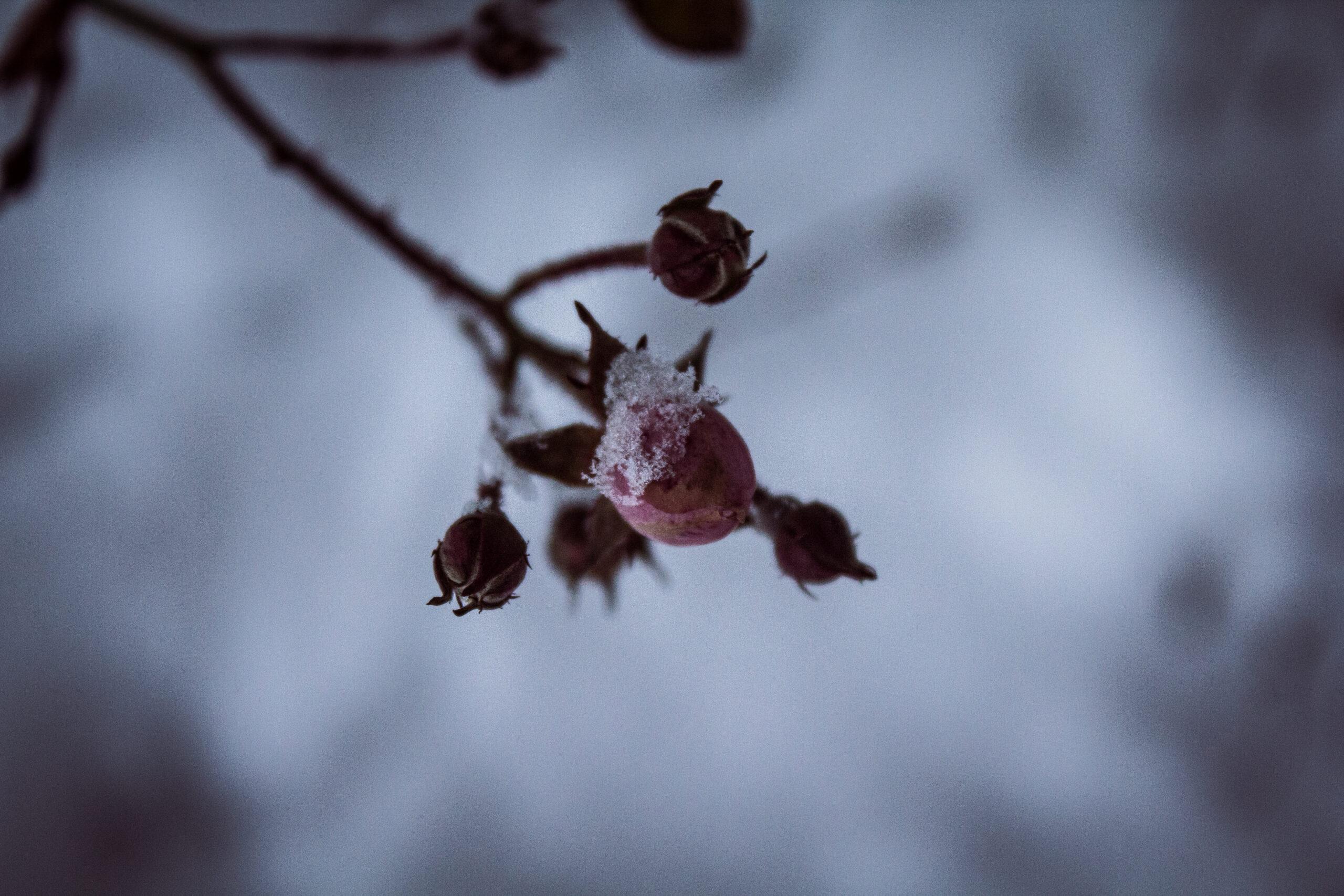 Ogród w zimowej szacie.